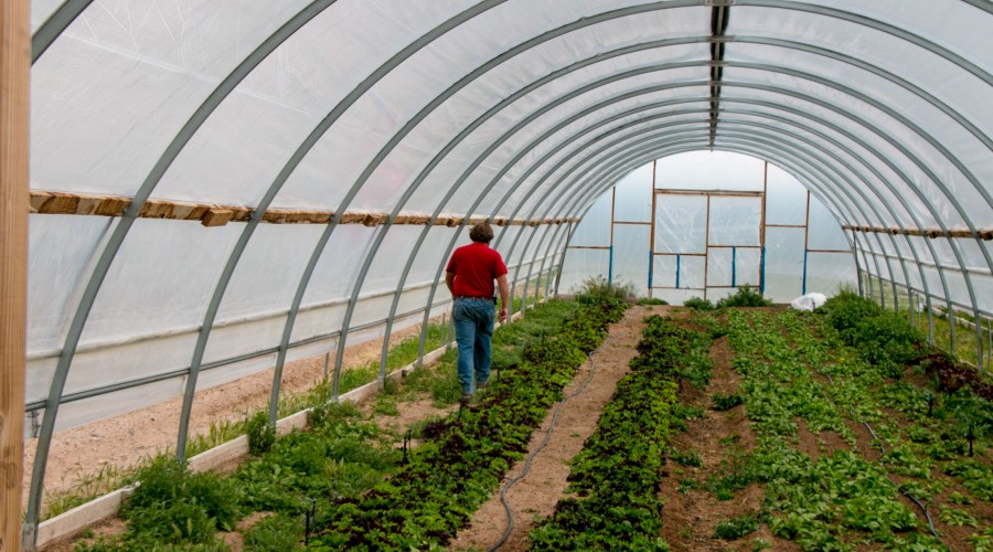 An Idea, a opportunity,  A Way to Pay it Forward, Micro Farms