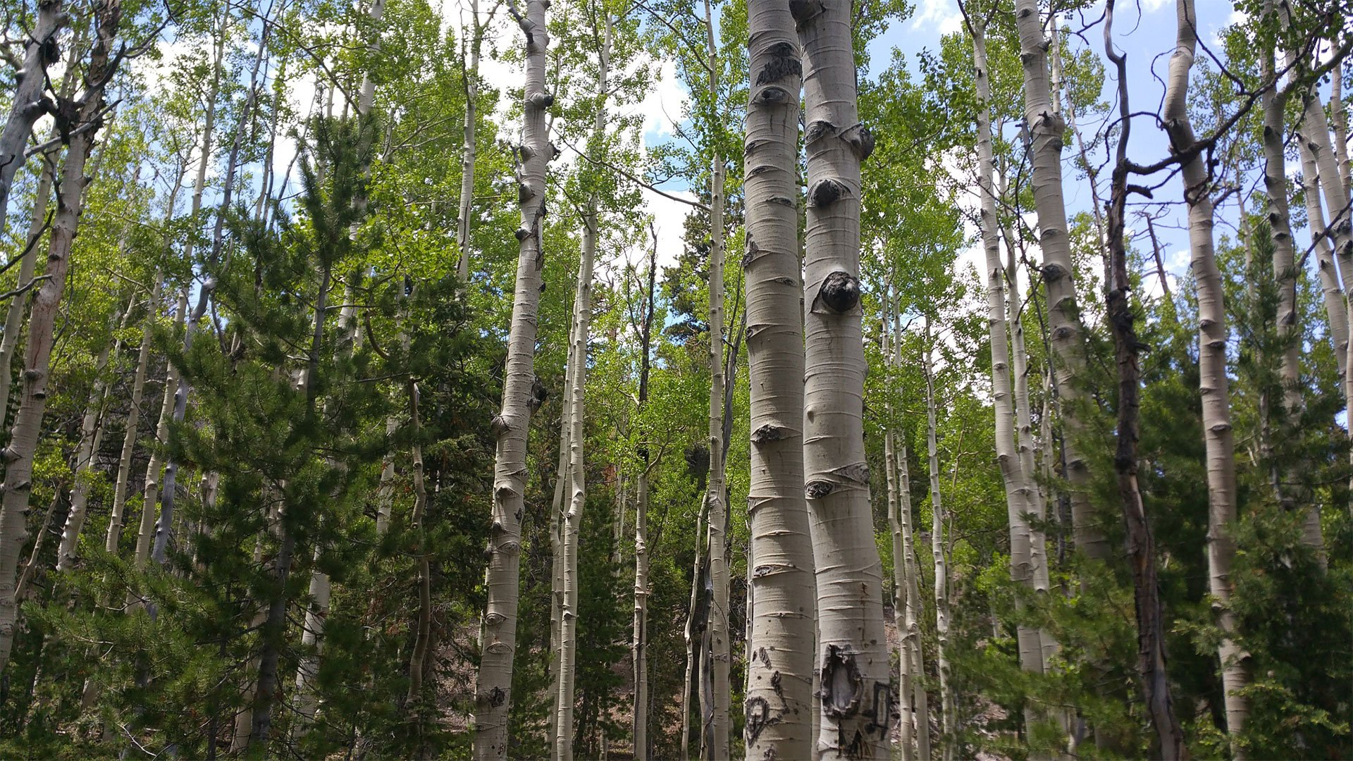 42 Aspens Productions, Tell your story Through Video