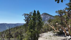 North Loop Trail, Mt. Charleston NV