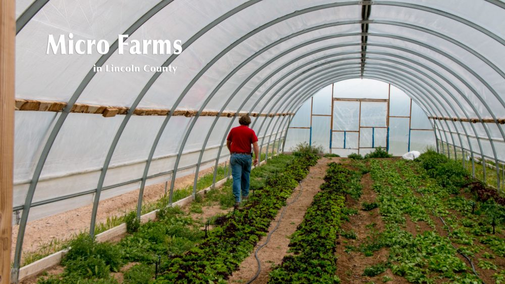 Blue Lizard Farm, Micro Farming