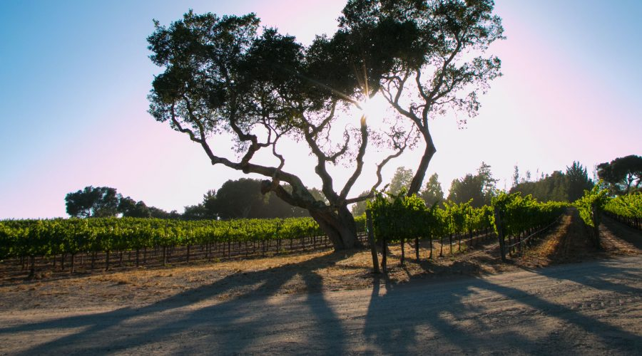 Create a Wine Harvest Video